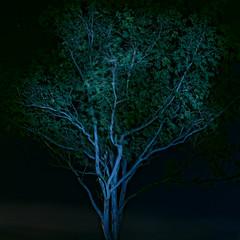 BC2_3671_DxO 1920 (brc.photography) Tags: bundaberg qld australia aus night d750 nikon
