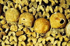 Paris Les Catacombs 13.9.2016 3840 (orangevolvobusdriver4u) Tags: 2016 archiv2016 france frankreich paris friedhof cemetary katakombe lescatacombs catacomb knochen bones skull schdel