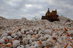Bivalve, NJ (elisecavicchi) Tags: conch shell pile mountain forklift new jersey nj bivalve fishing village orange port norris shore sea overcast storm mound autumn october fall perspective commercial township cloud