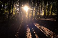 La magie de la lumire / Magic Light (Gilderic Photography) Tags: liege belgium belgique belgie light autumn lumiere woods trees sun shadows canon g7x gilderic