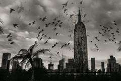 Wild ( Esther ) Tags: landscape birds old vintage abstract new york black white creative photo usa canon skyscraper city photography manhattan historic wild animal empirestate art