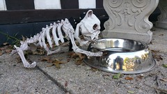 Dead Dog at Water Bowl (Gamma Man) Tags: elichristman elijahchristman elijameschristman elijahjameschristman elichristmanrva elijahchristmanrva elichristmanrichmondva elichristmanrichmondvirginia elijahchristmanrichmondva elijahchristmanrichmondvirginia halloween halloweendecoration dog deaddog dogskeleton skeleton