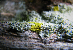 IMG_9367 (Mat_B) Tags: moraine hills state park nature natural area photography walk fall 2016 lichen plant super macro lime green detail