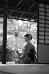 Maiko20161017_03_11 (kyoto flower) Tags: tanan fukuno kyoto maiko 20161017     gaap