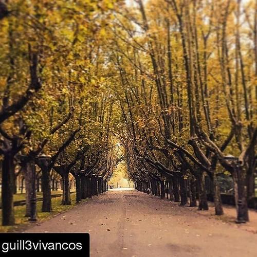 ¿Un paseo? Disfruta de los paisajes de #otoño en #Zaragoza. Os deseamos un #felizlunes con esta foto de @guill3vivancos #HappyMonday #Bonlundi