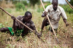 New tools (FAOemergencies) Tags: fao food agriculture crops cultivation cultivators farmers farming fish foodsecurity sorghum aweil northernbahralgazal southsudan emergencies africa resilience groundnuts