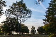 22102016-PBP_6104 (Berns Patrick) Tags: pins landes lac azur foret soleil matin ponton pigne