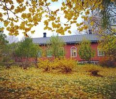 yellow atmosphere  (T.Lattu) Tags: autumn fall syksy yellow
