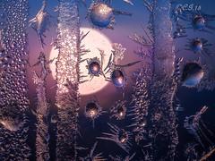 Frost # 41 (claudiaulrikegoodall) Tags: lumix frost panasonic eisblumen