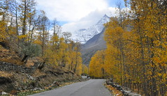Autumn (mala singh) Tags: road autumn india mountains valley himalayas himachalpradesh lahaul manalilehhighway
