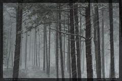 foreste del pratomagno in inverno (fotografia per passione) Tags: winter snow forest canon photo tuscany neve toscana toscane inverno nationalgeographic casentino arezzo foresta pratomagno foreste canoniani mksphoto
