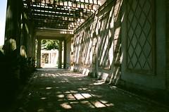 Garden Light (september.) Tags: nyc light summer sun newyork film 35mm grid sunny upstate canonae1 yonkers canonfd fujifilmsuperia400 untermyergardens