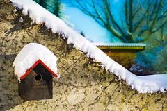 Original sweet Bird`s home beyond an unreal nature (lichtspur) Tags: world winter white house snow cold bird home birds colours sony haus impressions impressionen unreal alpha vgel 6000 vogel unwirklich a6000 ilce6000