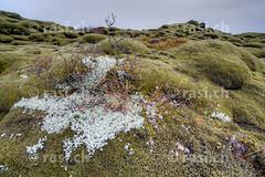 Lichen (gerhard.rasi) Tags: island iceland 28 nikkor 2014 suurland 1424 rasi dsc9754 rasich d800e