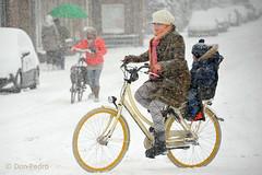 Let-it-snow,let-it-snow . . . . (Don Pedro de Carrion de los Condes !) Tags: winter snow sneeuw winters 2012 nijkerk donpedro archief sneeuwvlokken sneeuwval winterlandschap winterlich winterweer winterkost kerstwens sneeuwbui wittewereld d700 sneuuwlandschap fietserindesneeuw
