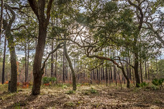 North Florida Foliage (JBM.photography) Tags: camp forest moss woods florida north surreal wanderlust foliage pines toyota citrus jailbait tacomaworld billmoranon jmbwphotography moranon
