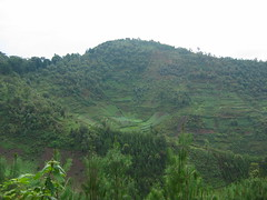 Terraced Hillsides Around Lake Bunyonyi