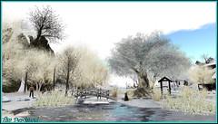 Paysage hivernal (Tim Deschanel) Tags: life winter tree landscape island tim hiver sl second paysage arbre laluna deschanel frisland