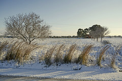 Dorme la terra sotto la neve - Sleeps the earth under the snow. (sinetempore) Tags: street trees white snow grass alberi strada campagna erba neve campaign bianco salento puglia dormelaterrasottolaneve sleepstheearthunderthesnow
