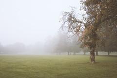 odditree (I AM JAMIE KING) Tags: park morning autumn mist cold tree strange fog season branches odd hull