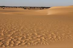 Sand dune (ronniedankelman) Tags: africa travel art sahara beautiful canon amazing sand desert soedan kunst sudan dune afrika mooi colourful sanddune zand kleurrijk reizen duin woestijn schoonheid waanzinnig zandduin