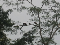 Monkeys on the Branch