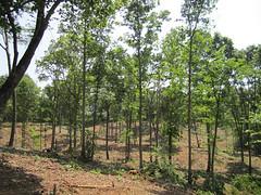 Select cut hardwoods