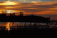 Golden evening (Threin Ottossen) Tags: sunset sky denmark inlet loland thebestyellow