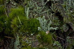 Forest Coral (gwendolyn.allsop) Tags: tree green nature moss lichen