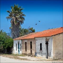 san giovanni di sinis (heavenuphere) Tags: sangiovannidisinis penisoladelsinis sinis peninsula cabras oristano sardegna sardinia sardinie italia italy europe island houses palm tree 24105mm