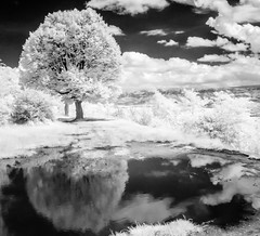 (Between) Water and Sky (DomiKetu) Tags: trees sky blackandwhite bw black reflection water monochrome clouds ir mono blackwhite panasonic infrared blackwhitephotos 850nm tz10