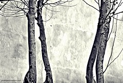 Desnudos (Aprehendiz-Ana La) Tags: rboles arbore albero fotografa flickr analialarroude nikon luz monocromtico bn noireblanc ramas nudos solos invierno argentina bw