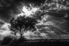 Tree (nigdawphotography) Tags: tree silhouette light sunlight crop arable rays sunrays