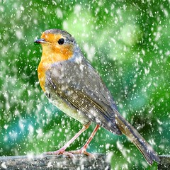 Spring Snow. (mortimer.adrian) Tags: nature animal bird robin detail snow beauty outdoor red
