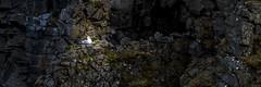 In The Spotlight (piparinn) Tags: sland iceland eyjafjrur hmundastaarhls fuglar birds mkki fll fulmar heidar piparinn nikond610 d610 fx spotlight