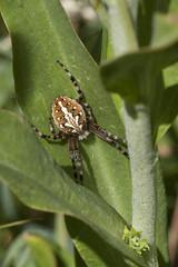 patience (Jeff Mitton) Tags: spider meadow predator colorado coloradoplateau earthnaturelife wondersofnature