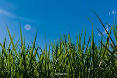 Grass (fer5275) Tags: blue sky green grass cali forest print landscape saturated colombia grove citadel lugares hdr beforeafter elcastillo pavas braketing