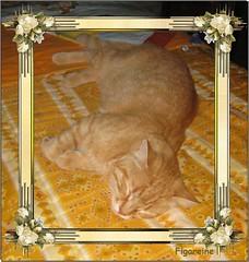 Au revoir beau et gentil Titi ! (Figareine- Michelle) Tags: chat bestofcats catmoments vg~catsgallery fabuleuse