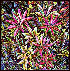 Electric Flowers with Border (randubnick) Tags: art digitalart shrubbery prismaapp