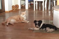 Sie hat mir den Mund ausgewaschen (rentmam1) Tags: dog hund cat katze lenny stan