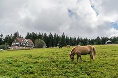 unbenannt (10 von 14).jpg (romuepic) Tags: feldberg schwarzwald