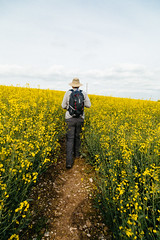 (peaflockster) Tags: england southwestengland travel hiking countryside foottrails rapeseed crops canola hiker trail