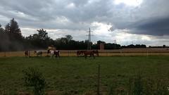 Pferde bei Friesenheim