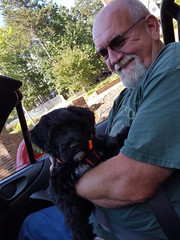 Daddy's Girl (crisp4dogs) Tags: gabby pwd portuguesewaterdog puppy bobby smile ride crisp4dogs