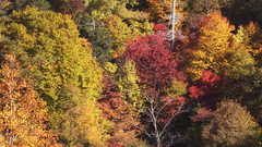 Slice of Autumn (jasohill) Tags: autumn october landscape tohoku nature city 2016 iwate trees adventure hachimantai photography life colors travel color japan vibrant eos 80d