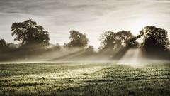 2016 Eades - Break Through (Birm) Tags: eadesmeadow worcestershirewildlifetrust autumn september mist morning sunrise landscape sony meadow green field sunlight sun trees hedgerow grass