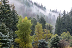 Bogan Flats (NaturalLight) Tags: boganflats campground colorado forest clouds fog spruce