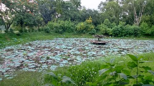 Jahangirnagar University 11