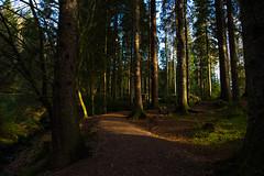 Queen Elizabeth Forest (Alec-Gibson) Tags: aberfoyle forest autumn scotland