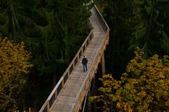 The man on the bridge (Alicia FB) Tags: bridge pont passerelle bois wood saarland sarre allemagne boy man forest fort wild automn automne